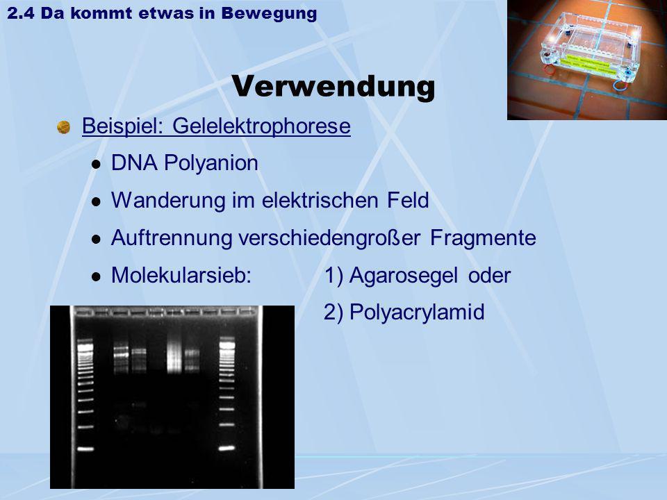 Verwendung Beispiel: Gelelektrophorese DNA Polyanion Wanderung im elektrischen Feld Auftrennung verschiedengroßer Fragmente Molekularsieb: 1) Agaroseg