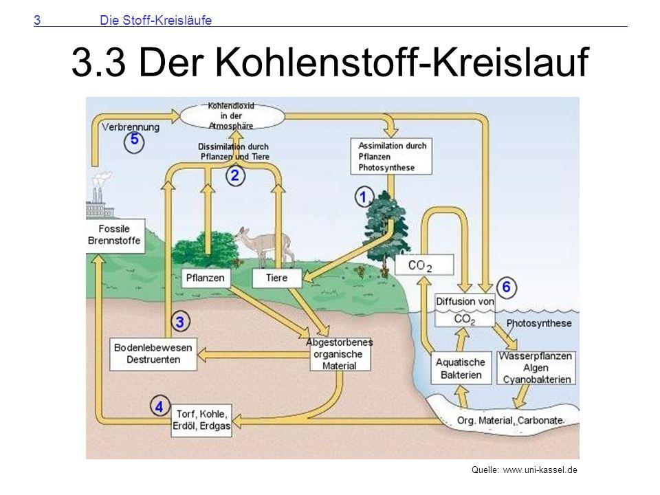 Kreislauf Der Stoffe 3.3 Der Kohlenstoff-kreislauf