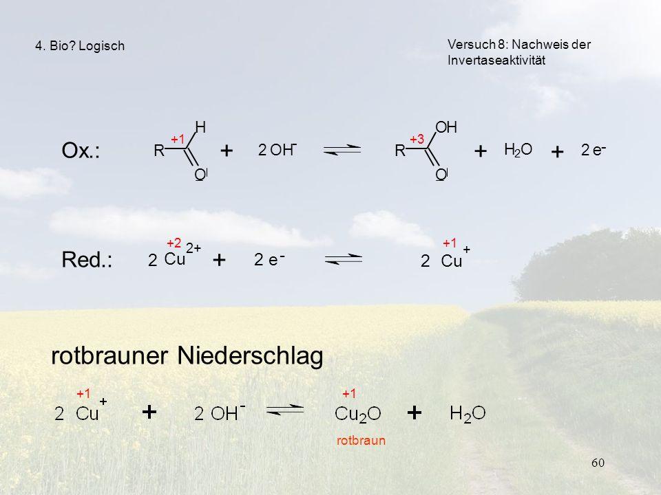 60 R O H + 2 OH R O OH + H 2 O + 2 e - - Versuch 8: Nachweis der Invertaseaktivität 4. Bio? Logisch +1+3 Ox.: Red.: rotbrauner Niederschlag +1 rotbrau