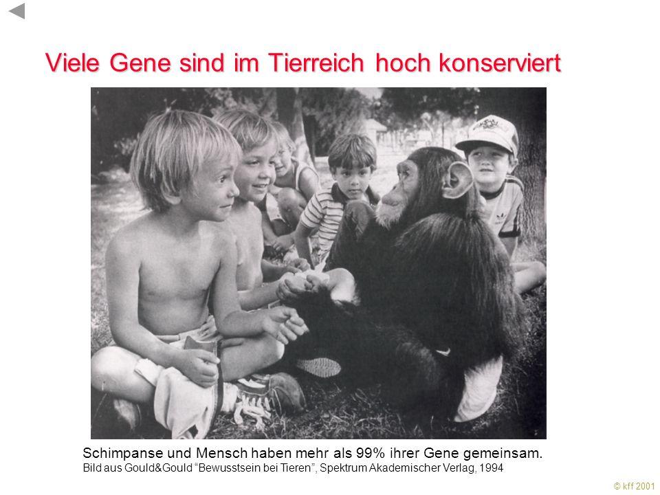 Karl-Friedrich Fischbach Institut für Biologie III Schänzlestr.1 79104 Freiburg i. Brsg. E-Mail: kff@uni-freiburg.de WWW: http://filab.biologie.uni-fr