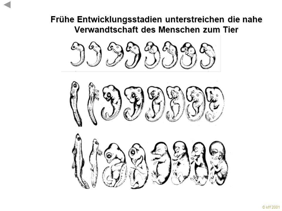 © kff 2001 KFF 2001 Viele Gene sind im Tierreich hoch konserviert Schimpanse und Mensch haben mehr als 99% ihrer Gene gemeinsam. Bild aus Gould&Gould