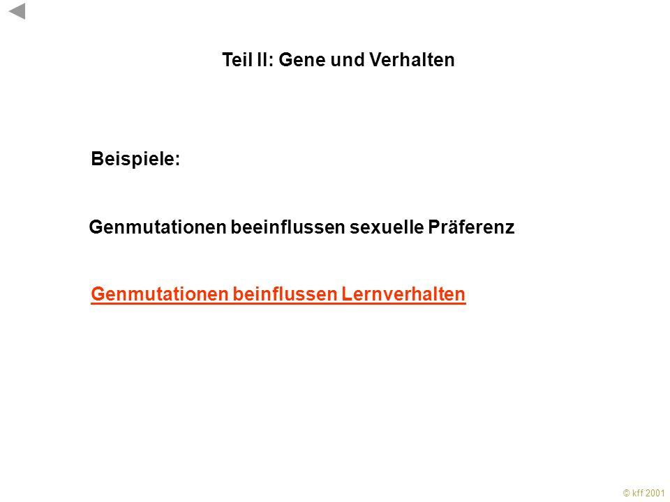 © kff 2001 KFF 2001 Auch das fruitless Gen ist für die Ausprägung des Sexualverhaltens wichtig. Seine Expression im ZNS markiert Neurone mit Bedeutung