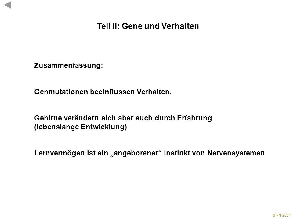 © kff 2001 KFF 2001 Genmutationen beeinflussen sexuelle Präferenz Teil II: Gene und Verhalten Beispiele: Genmutationen beinflussen Lernverhalten