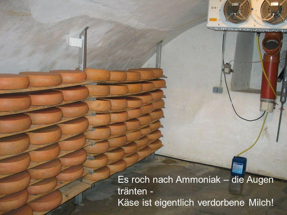 Es roch nach Ammoniak – die Augen tränten - Käse ist eigentlich verdorbene Milch!