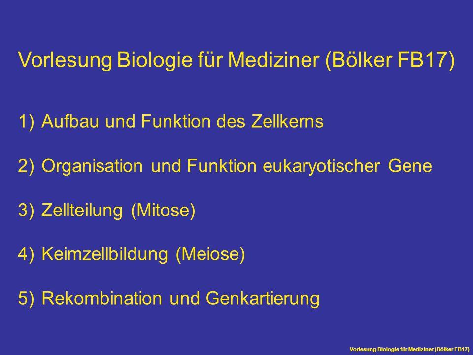 Vorlesung Biologie für Mediziner (Bölker FB17) 1)Aufbau und Funktion des Zellkerns 2)Organisation und Funktion eukaryotischer Gene 3)Zellteilung (Mito