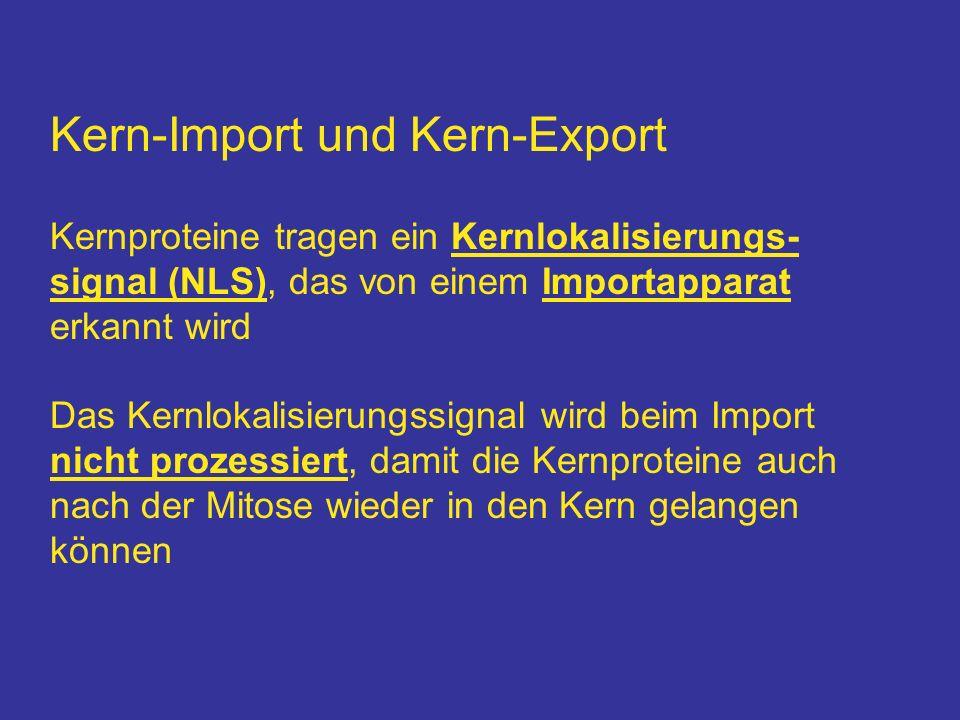 Kern-Import und Kern-Export Kernproteine tragen ein Kernlokalisierungs- signal (NLS), das von einem Importapparat erkannt wird Das Kernlokalisierungss