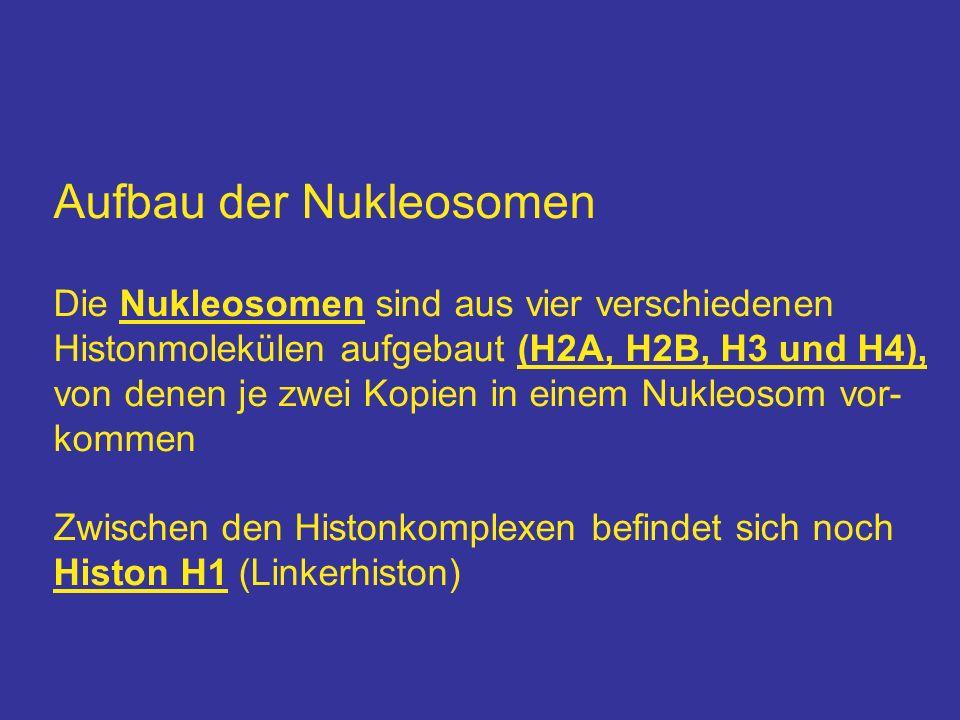 Aufbau der Nukleosomen Die Nukleosomen sind aus vier verschiedenen Histonmolekülen aufgebaut (H2A, H2B, H3 und H4), von denen je zwei Kopien in einem