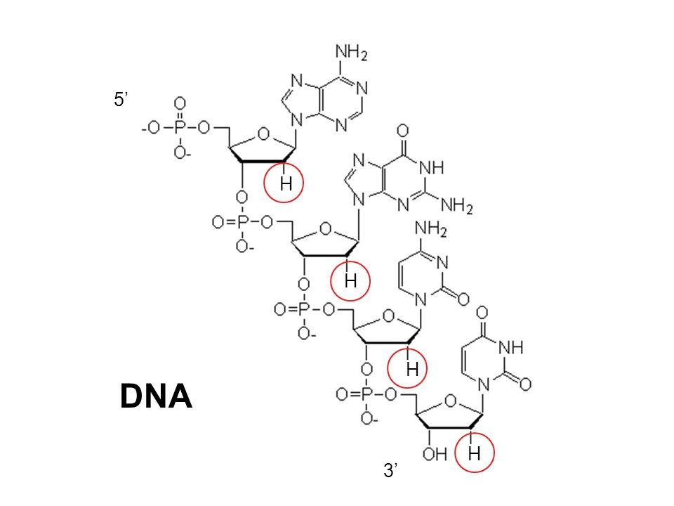 5 3 DNA H H H H