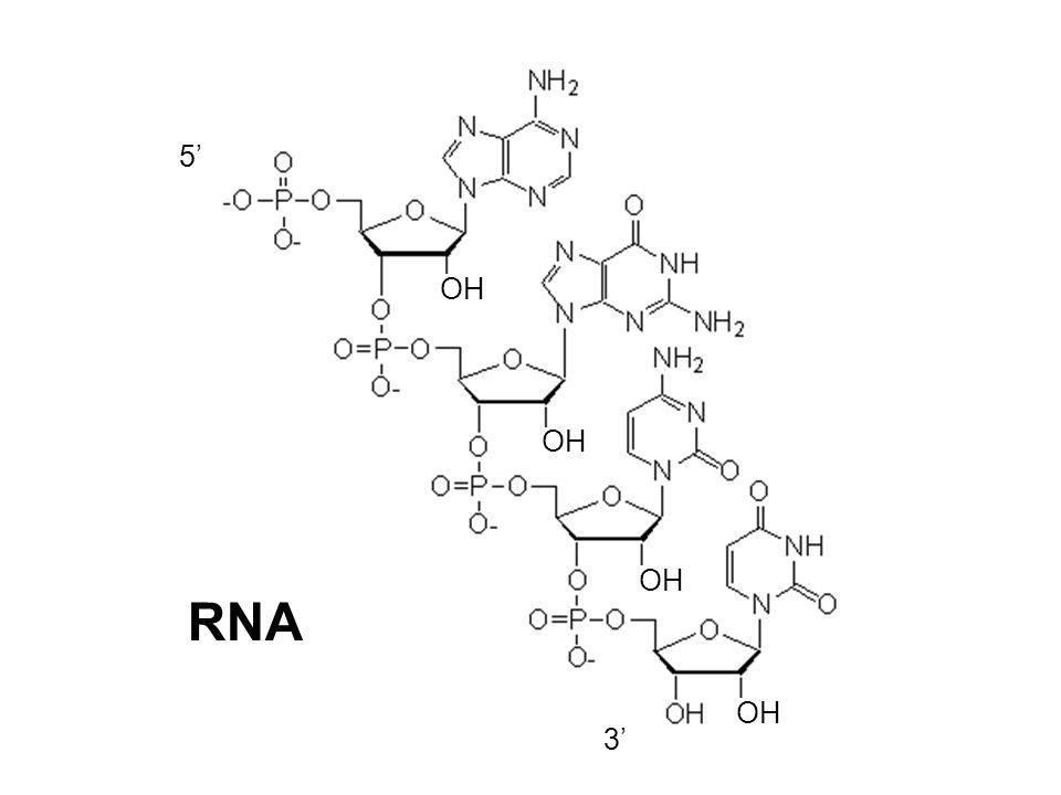 RNA OH 5 3