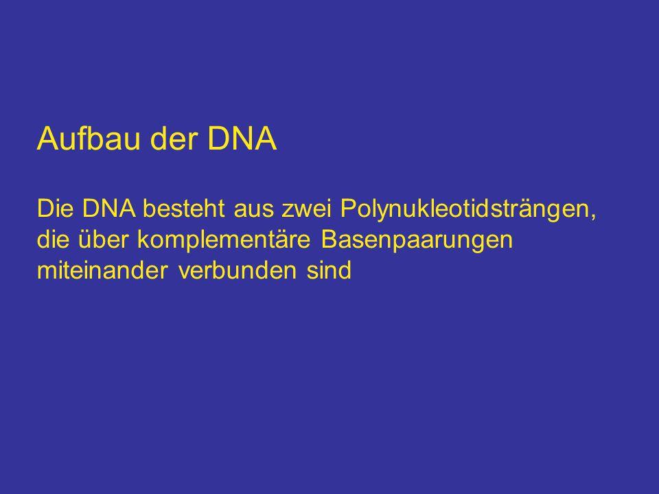 Aufbau der DNA Die DNA besteht aus zwei Polynukleotidsträngen, die über komplementäre Basenpaarungen miteinander verbunden sind