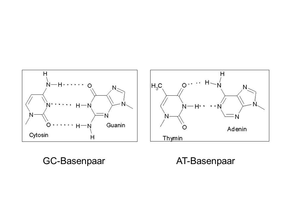 GC-BasenpaarAT-Basenpaar