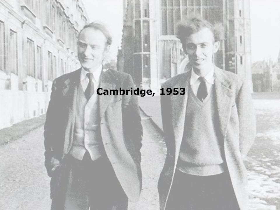 Cambridge, 1953