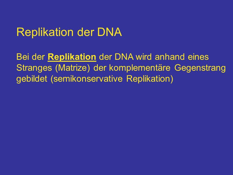Replikation der DNA Bei der Replikation der DNA wird anhand eines Stranges (Matrize) der komplementäre Gegenstrang gebildet (semikonservative Replikat