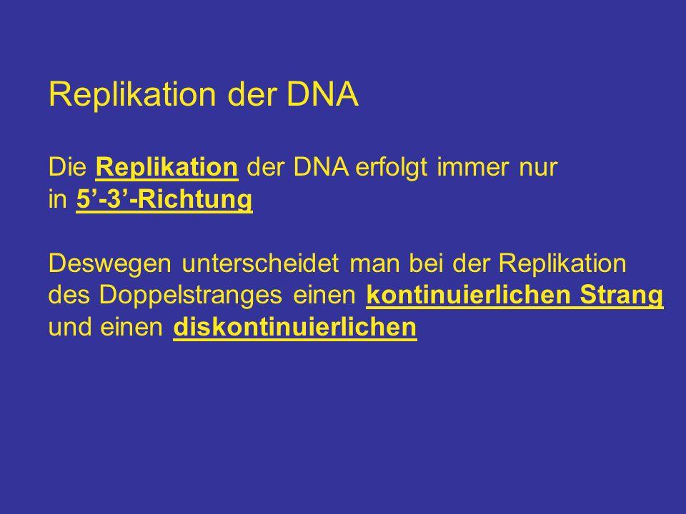 Replikation der DNA Die Replikation der DNA erfolgt immer nur in 5-3-Richtung Deswegen unterscheidet man bei der Replikation des Doppelstranges einen