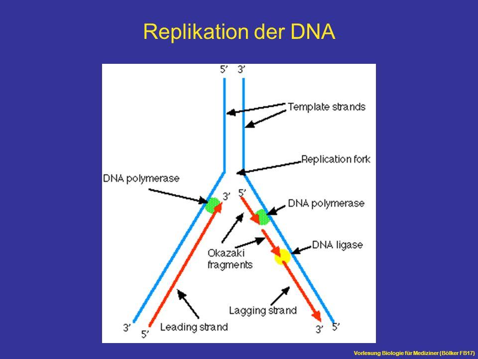 Vorlesung Biologie für Mediziner (Bölker FB17) Replikation der DNA