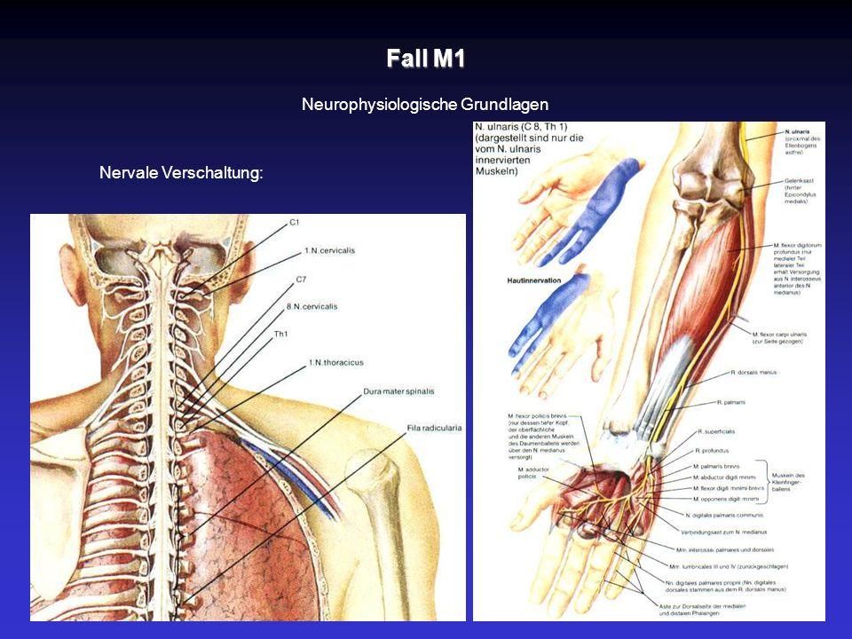 Fall M1 Neurophysiologische Grundlagen Nervale Verschaltung: