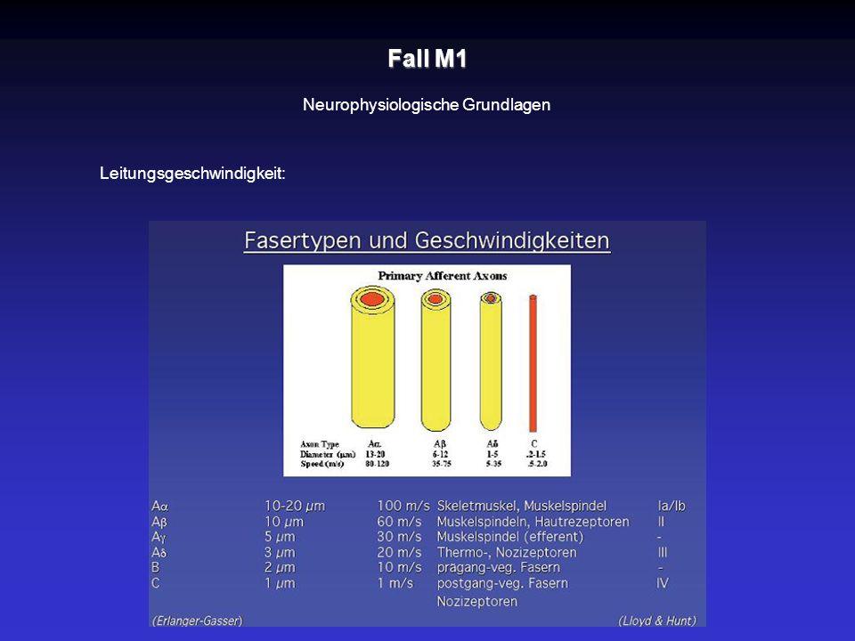 Fall M1 Neurophysiologische Grundlagen Leitungsgeschwindigkeit:
