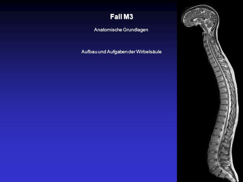 Fall M3 Anatomische Grundlagen Aufbau und Aufgaben der Wirbelsäule