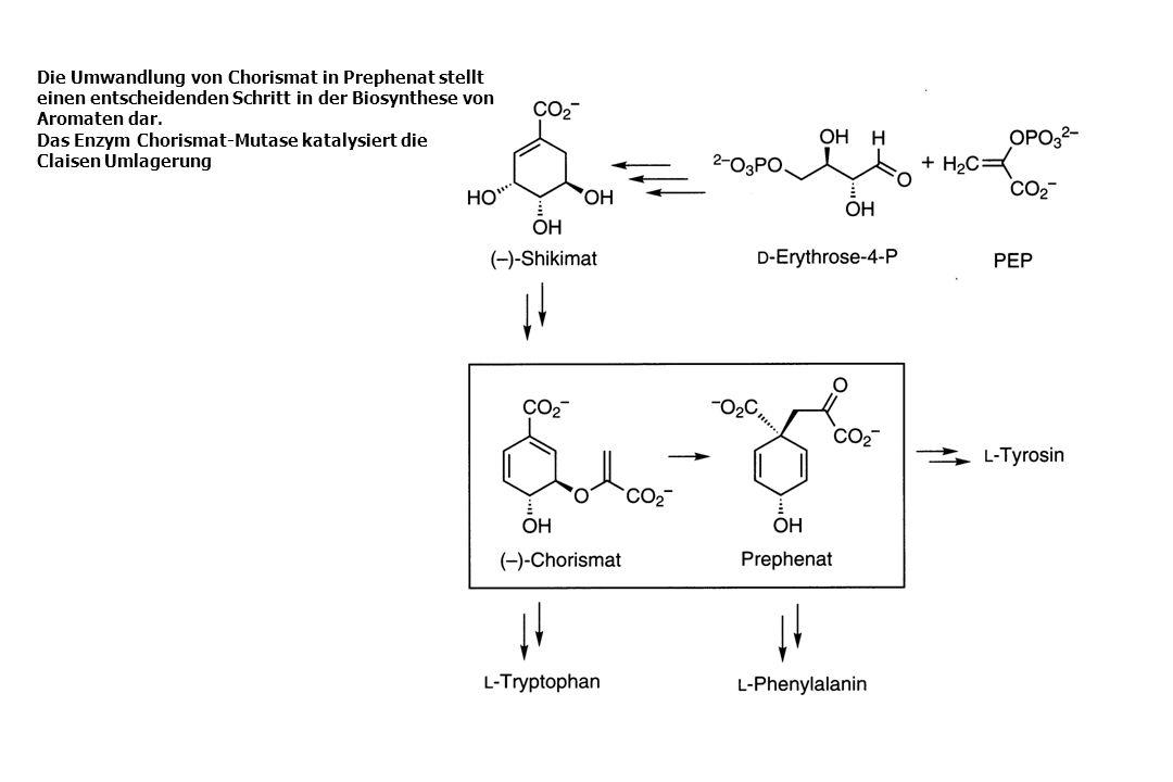 Die Umwandlung von Chorismat in Prephenat stellt einen entscheidenden Schritt in der Biosynthese von Aromaten dar. Das Enzym Chorismat-Mutase katalysi