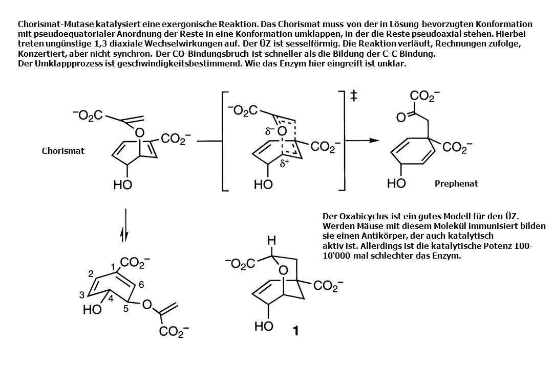 Chorismat Prephenat Chorismat-Mutase katalysiert eine exergonische Reaktion. Das Chorismat muss von der in Lösung bevorzugten Konformation mit pseudoe