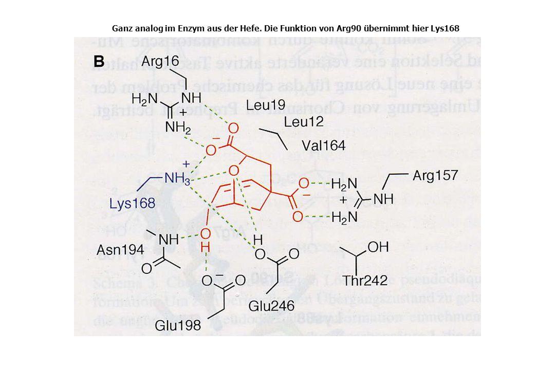 Ganz analog im Enzym aus der Hefe. Die Funktion von Arg90 übernimmt hier Lys168