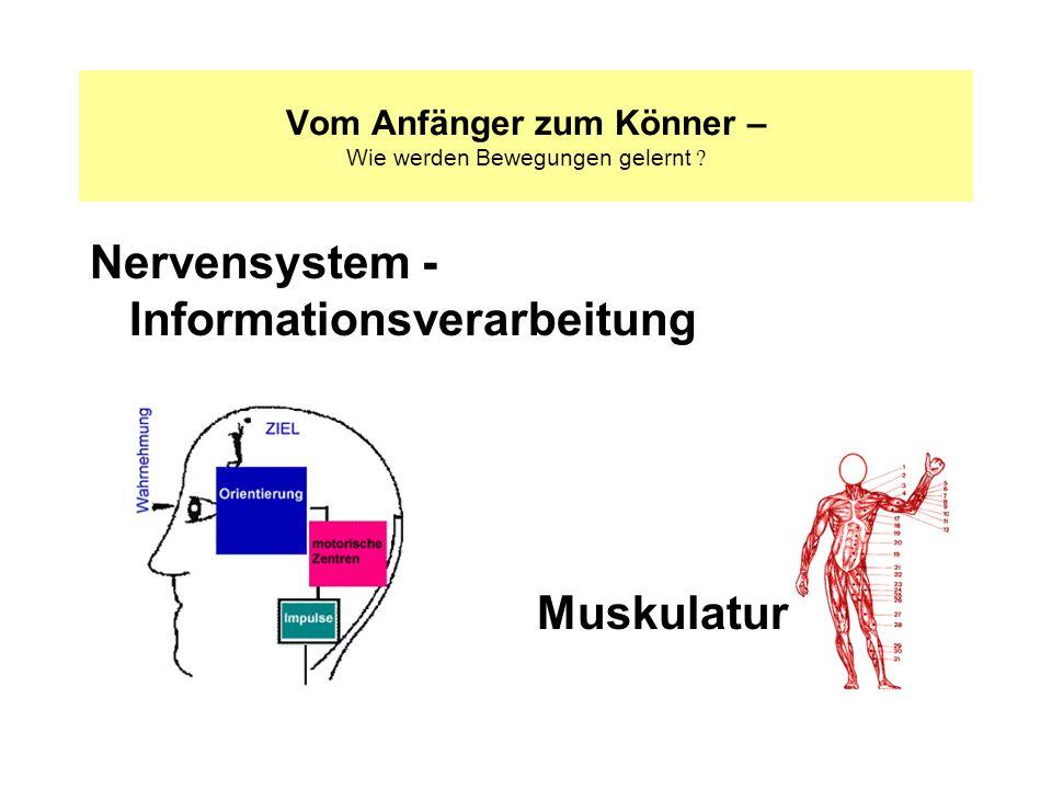 Nervensystem - Informationsverarbeitung Vom Anfänger zum Könner – Wie werden Bewegungen gelernt ? Muskulatur
