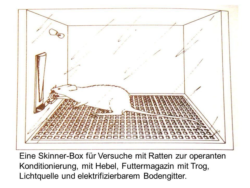 Eine Skinner-Box für Versuche mit Ratten zur operanten Konditionierung, mit Hebel, Futtermagazin mit Trog, Lichtquelle und elektrifizierbarem Bodengit