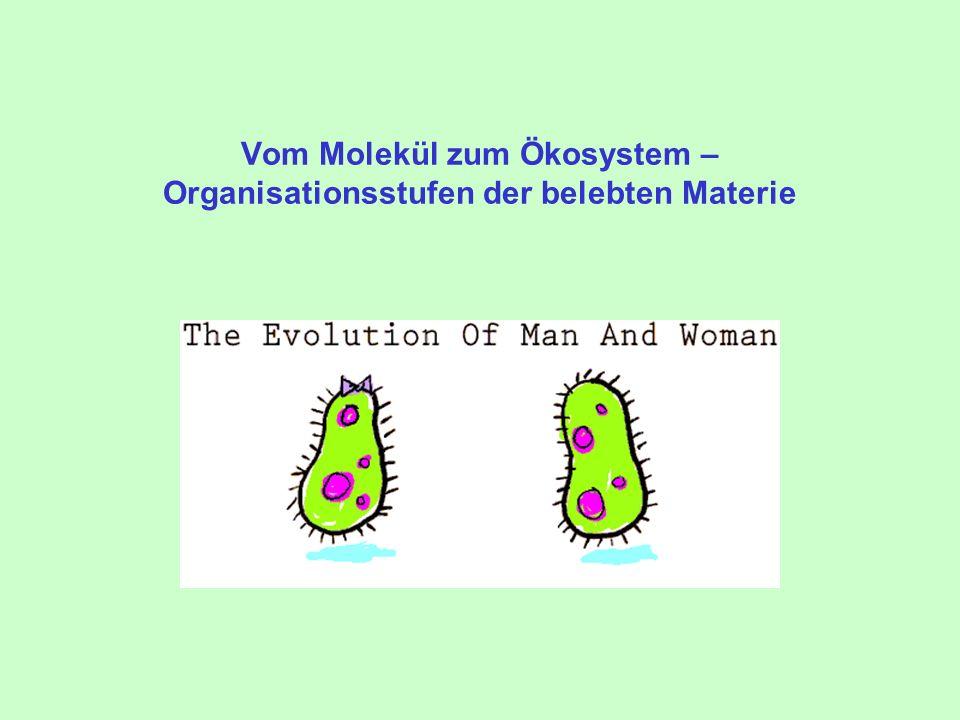 Vom Molekül zum Ökosystem – Organisationsstufen der belebten Materie