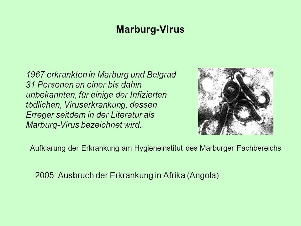 Marburg-Virus 1967 erkrankten in Marburg und Belgrad 31 Personen an einer bis dahin unbekannten, für einige der Infizierten tödlichen, Viruserkrankung
