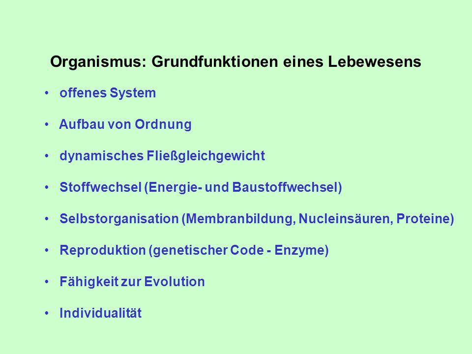 Organismus: Grundfunktionen eines Lebewesens offenes System Aufbau von Ordnung dynamisches Fließgleichgewicht Stoffwechsel (Energie- und Baustoffwechs