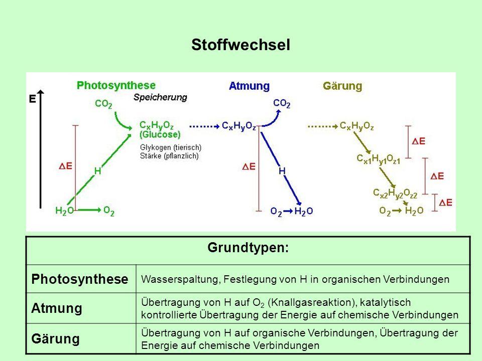 Stoffwechsel Grundtypen: Photosynthese Wasserspaltung, Festlegung von H in organischen Verbindungen Atmung Übertragung von H auf O 2 (Knallgasreaktion