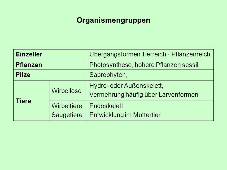 Organismengruppen EinzellerÜbergangsformen Tierreich - Pflanzenreich PflanzenPhotosynthese, höhere Pflanzen sessil PilzeSaprophyten, Tiere Wirbellose