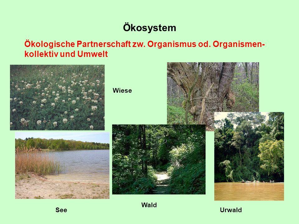 Ökosystem Ökologische Partnerschaft zw. Organismus od. Organismen- kollektiv und Umwelt Wiese See Wald Urwald