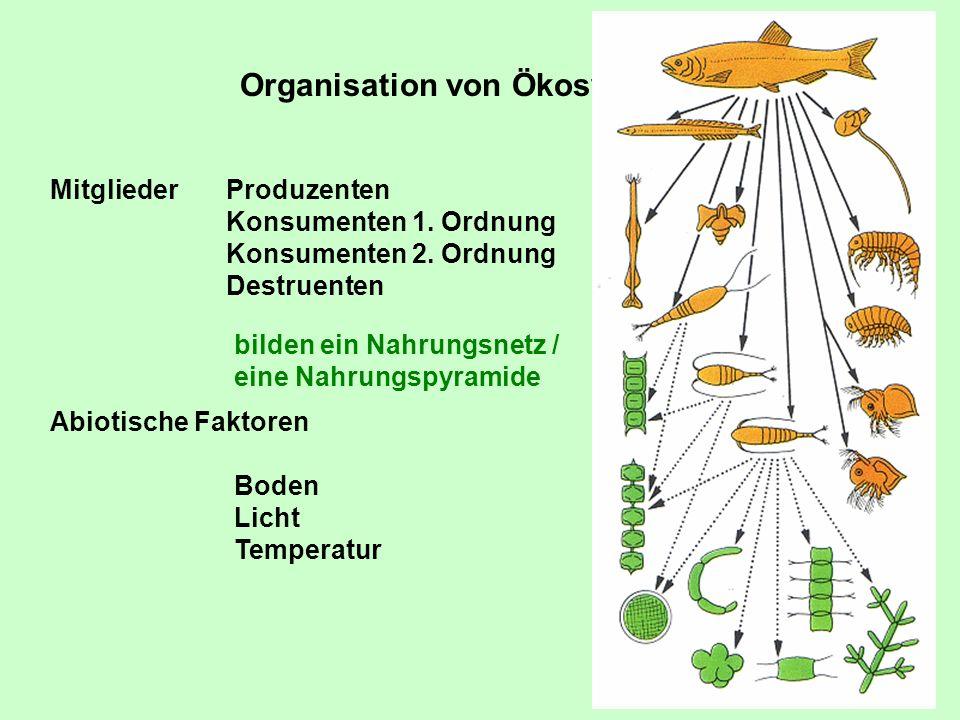 Organisation von Ökosystemen Mitglieder Abiotische Faktoren Produzenten Konsumenten 1. Ordnung Konsumenten 2. Ordnung Destruenten Boden Licht Temperat