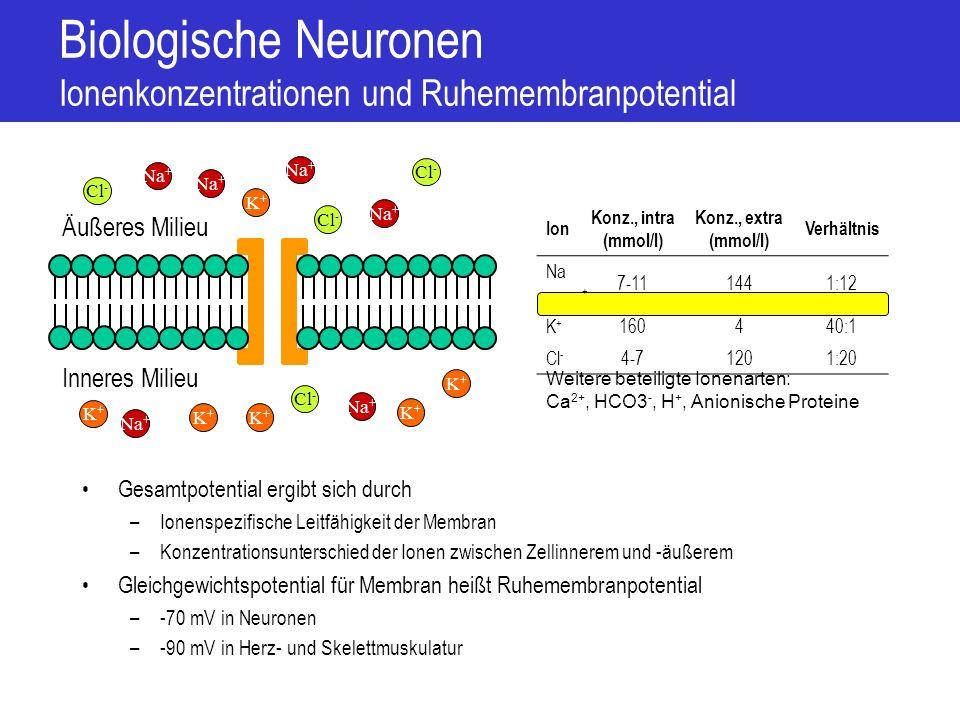 Biologische Neuronen Aktionspotential 1.Bei Spannungsanstieg –Öffnen von Na + -Kanälen –Ab Schwellen-Spannung Lawineneffekt 2.Na + kann einströmen Depolarisation 3.Na + -Kanäle schließen schnell wieder (vor Spannungsmaximum) Repolarisation 4.Na + -Kanäle sind eine zeitlang deaktiviert Refraktäre Phase 5.Verzögert öffnen sich K + -Kanäle Verstärkung der Repolarisierung 6.Öffnung der K + -Kanäle hält länger an Hyperpolarisation