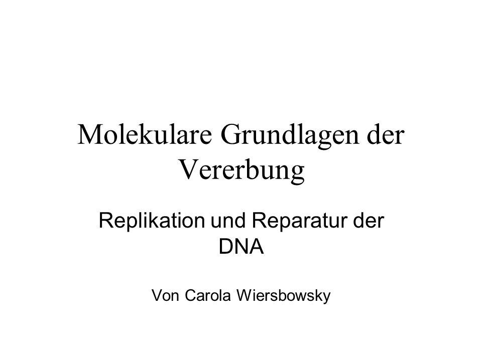 Molekulare Grundlagen der Vererbung Replikation und Reparatur der DNA Von Carola Wiersbowsky