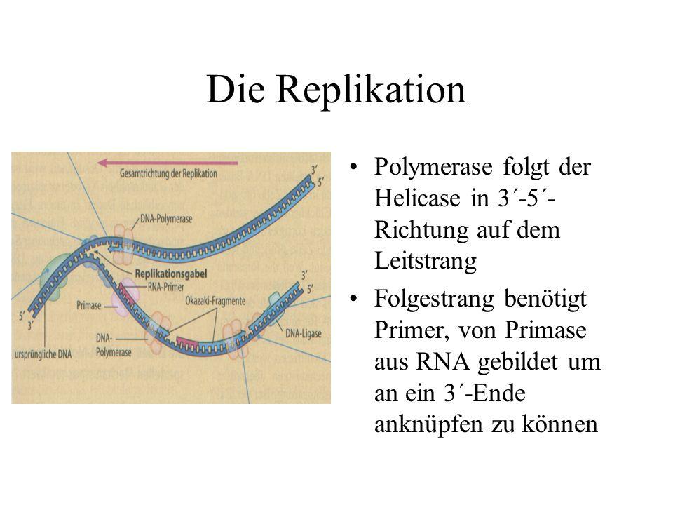 Die Replikation Polymerase folgt der Helicase in 3´-5´- Richtung auf dem Leitstrang Folgestrang benötigt Primer, von Primase aus RNA gebildet um an ein 3´-Ende anknüpfen zu können