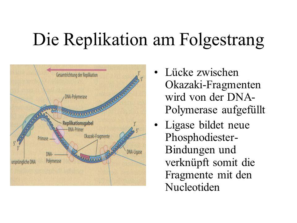 Die Replikation am Folgestrang Lücke zwischen Okazaki-Fragmenten wird von der DNA- Polymerase aufgefüllt Ligase bildet neue Phosphodiester- Bindungen und verknüpft somit die Fragmente mit den Nucleotiden