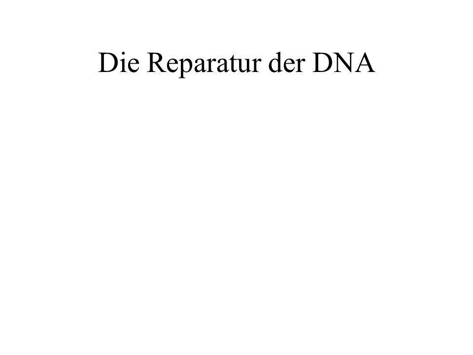 Die Reparatur der DNA
