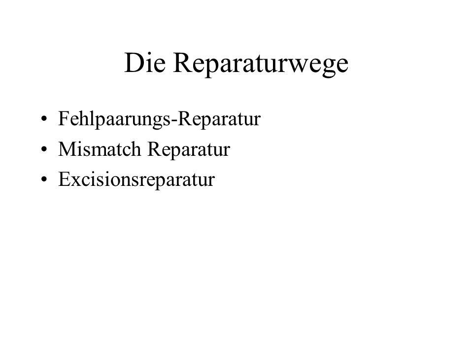 Die Reparaturwege Fehlpaarungs-Reparatur Mismatch Reparatur Excisionsreparatur