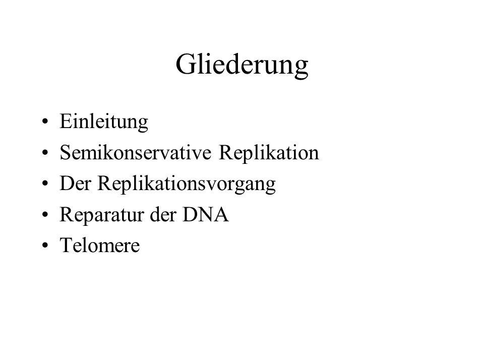 Gliederung Einleitung Semikonservative Replikation Der Replikationsvorgang Reparatur der DNA Telomere