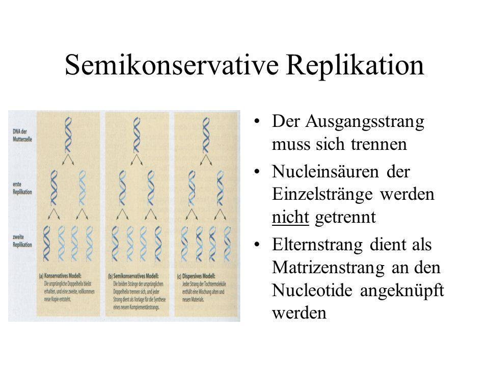 Semikonservative Replikation Der Ausgangsstrang muss sich trennen Nucleinsäuren der Einzelstränge werden nicht getrennt Elternstrang dient als Matrizenstrang an den Nucleotide angeknüpft werden