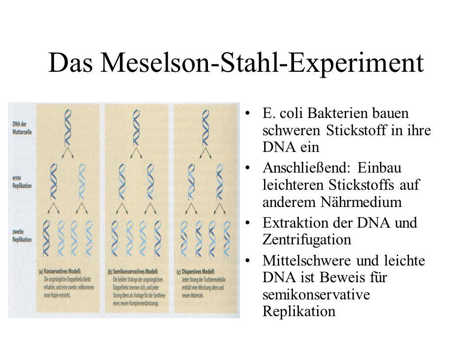 Das Meselson-Stahl-Experiment E.