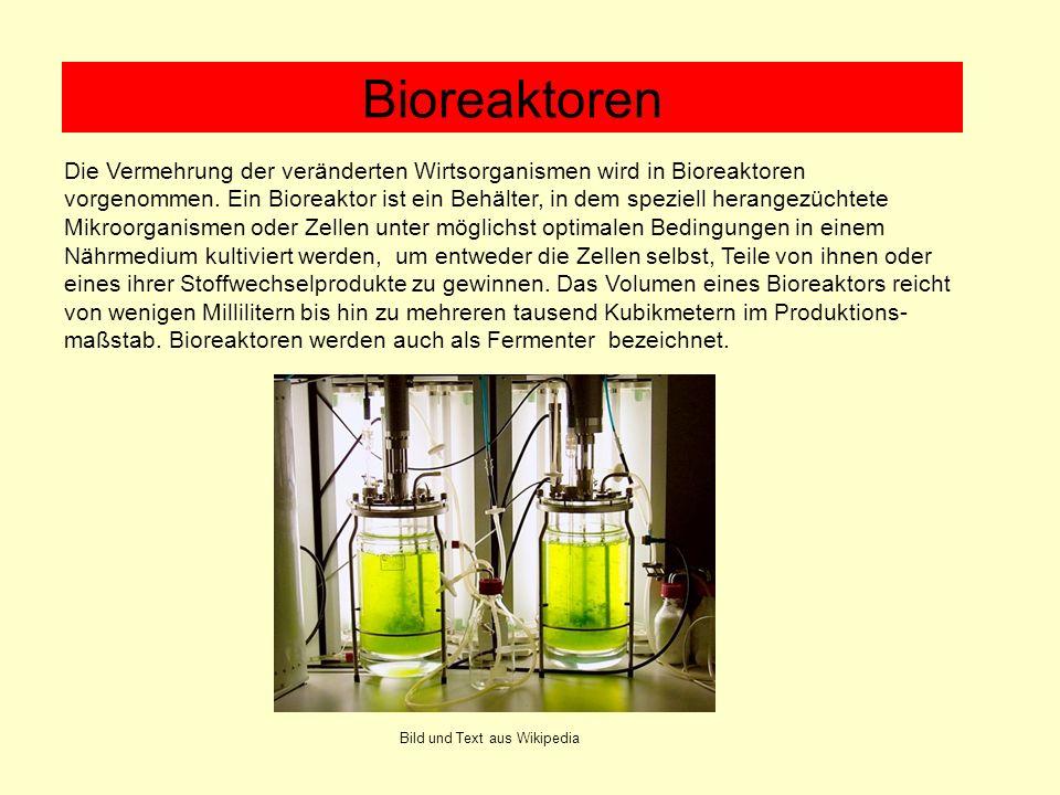 Die Vermehrung der veränderten Wirtsorganismen wird in Bioreaktoren vorgenommen. Ein Bioreaktor ist ein Behälter, in dem speziell herangezüchtete Mikr