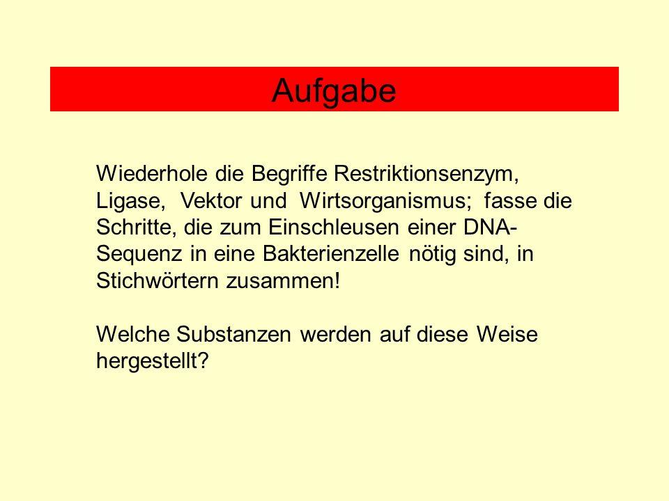 Wiederhole die Begriffe Restriktionsenzym, Ligase, Vektor und Wirtsorganismus; fasse die Schritte, die zum Einschleusen einer DNA- Sequenz in eine Bak