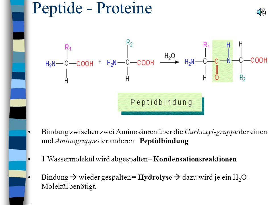 Peptide - Proteine Bindung zwischen zwei Aminosäuren über die Carboxyl-gruppe der einen und Aminogruppe der anderen =Peptidbindung 1 Wassermolekül wird abgespalten= Kondensationsreaktionen Bindung wieder gespalten = Hydrolyse dazu wird je ein H 2 O- Molekül benötigt.