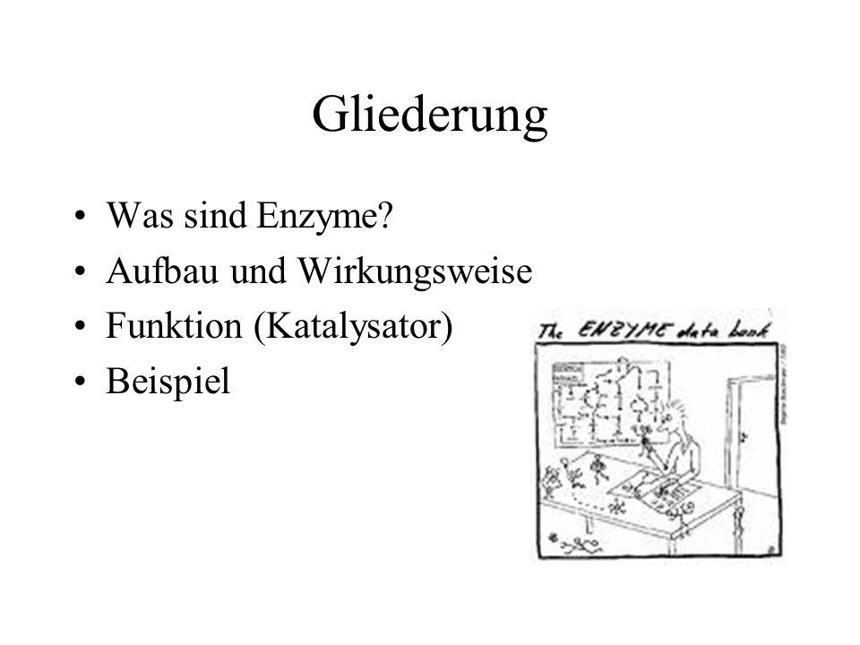 Quellen!!! Wikipedia.de/ Enzyme www.netdoktor.de Prof.Blume Chemiebücher der Beethoven-Schule