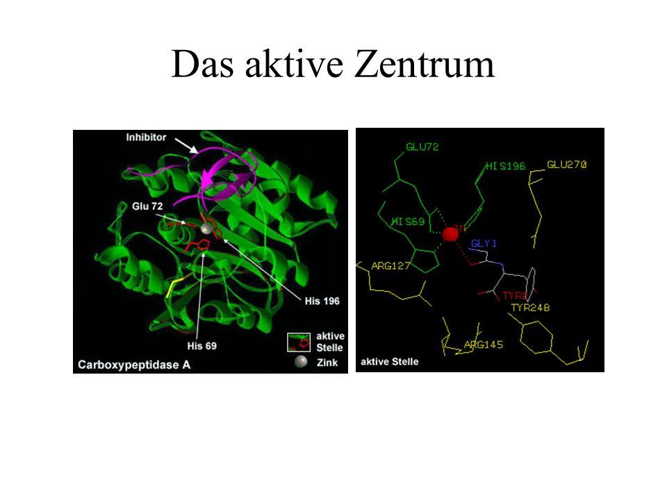 Aufbau und Wirkungsweise Proteinketten (eine Kette:Monomere, mehrere Ketten: Oligomere) Aktives Zentrum Reine Proteinenzyme & Holoenzyme Schlüssel- Sc