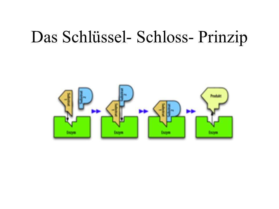 Das Schlüssel- Schloss- Prinzip