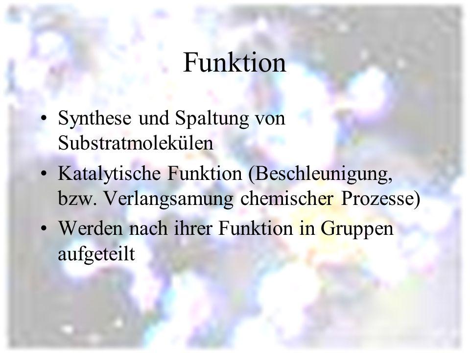 Funktion Synthese und Spaltung von Substratmolekülen Katalytische Funktion (Beschleunigung, bzw.